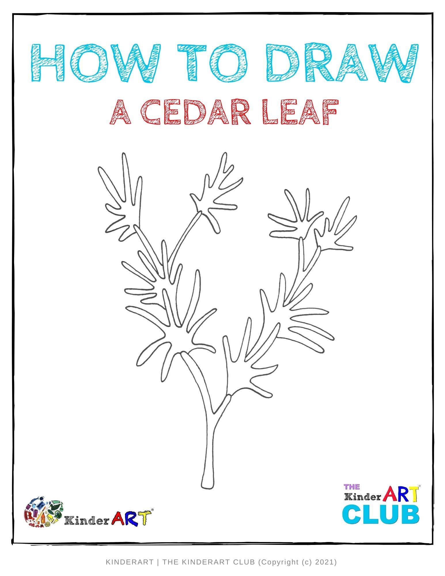 draw_cedar_leaf